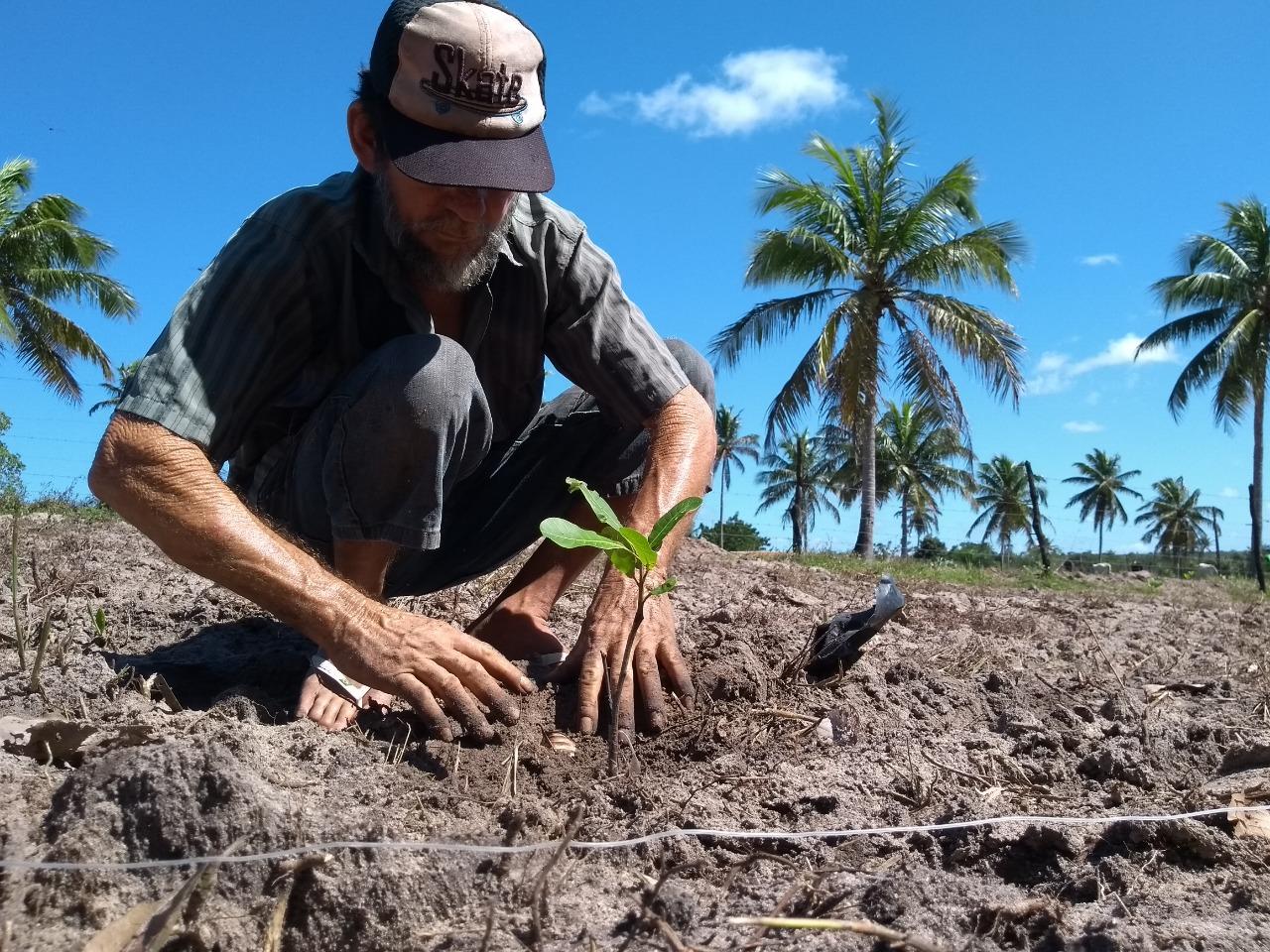 Prefeitura de São Gonçalo incentiva retomada da cajucultura no município