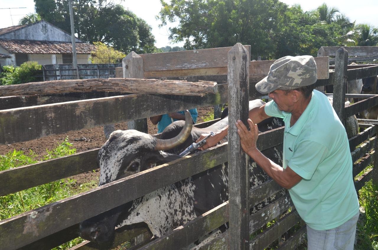 Prefeitura de São Gonçalo realiza vacinação contra Febre Aftosa e Brucelose