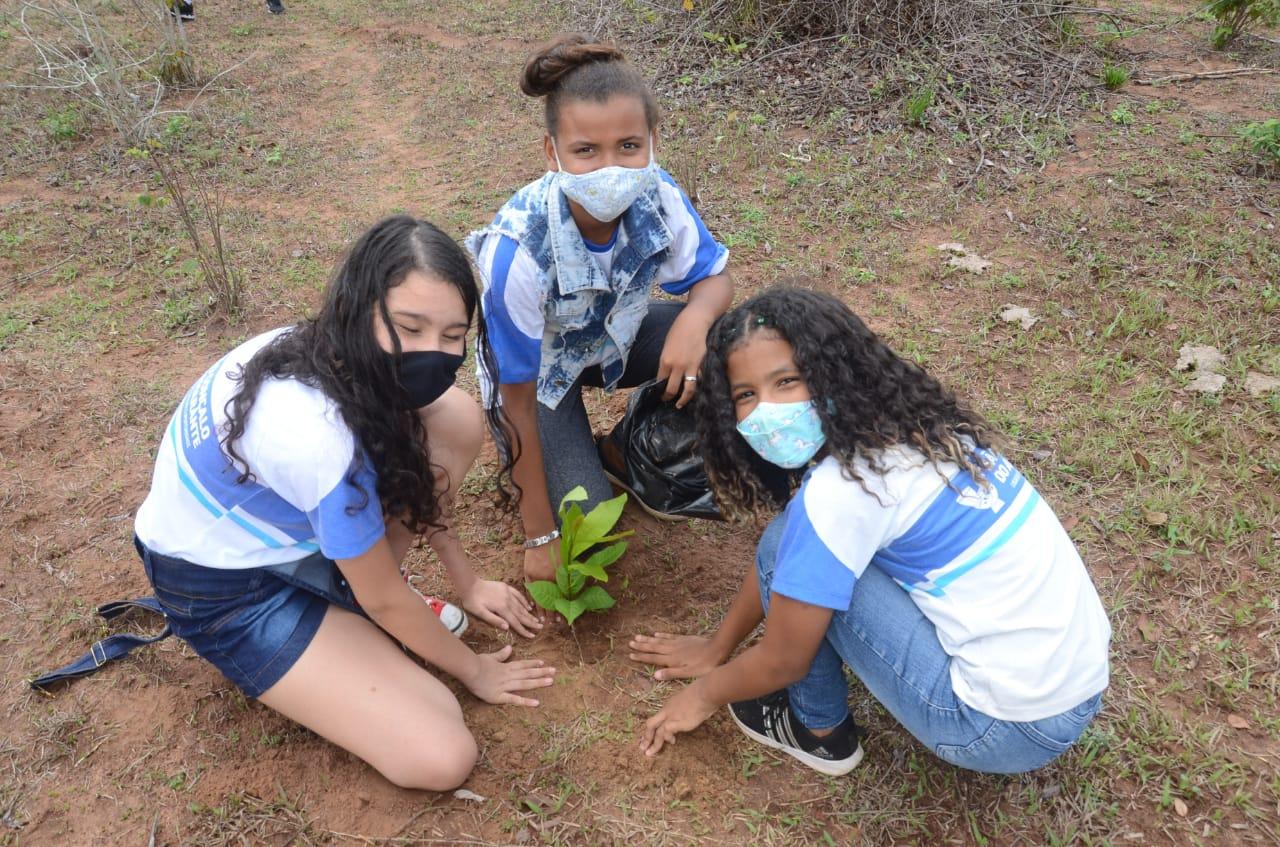 Parque Ecofolclórico Dona Militana recebe ação de reflorestamento